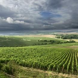 Wino Chablis najlepszym białym winem ?
