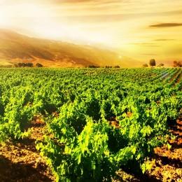 Wina Hiszpańskie – Rioja